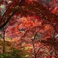 瑞宝寺公園の紅葉4-6