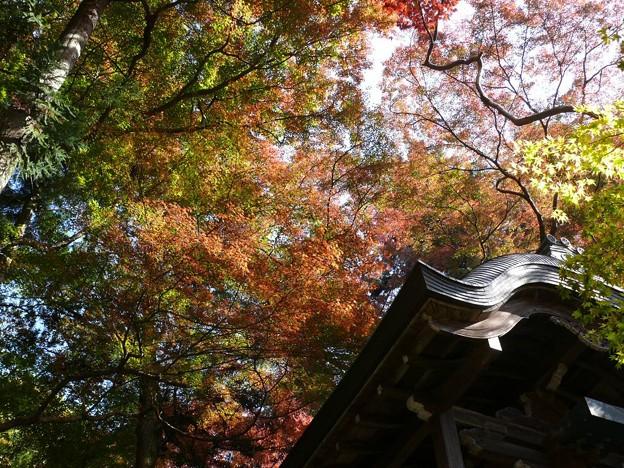 Photos: 瑞宝寺公園の紅葉4-8