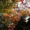 瑞宝寺公園の紅葉4-8