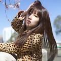 Photos: 桜 春風