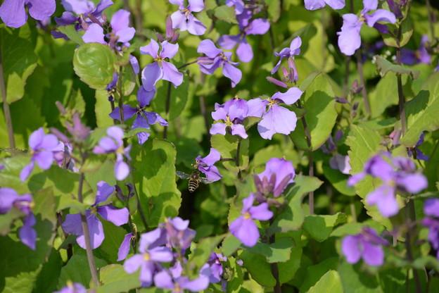 紫花とハチ