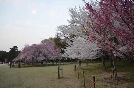 20140408 上賀茂神社
