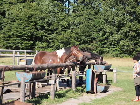 大沼公園の馬