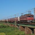 Photos: EF81貨物 羽越本線