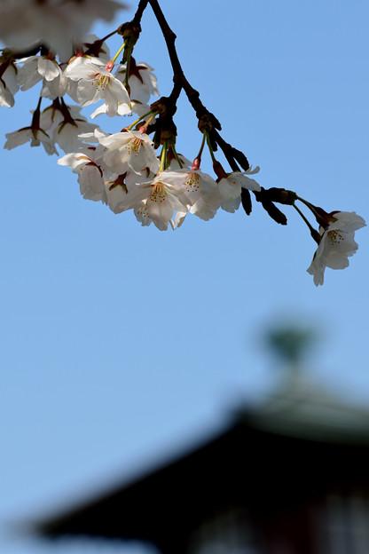 旧新潟税関庁舎にて / 2013.04.14