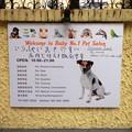 Photos: BABY NO.1 日本語も有り~~~~~ッ(笑)