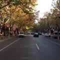 上海 紅松路の街路樹