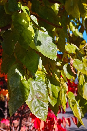 autumngreen