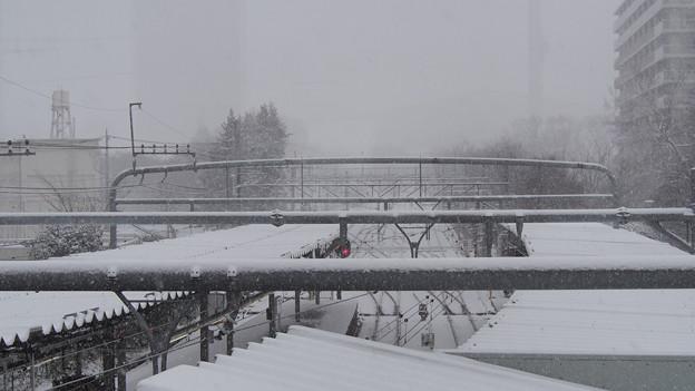 10年に一度の大雪 2014.2.8