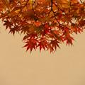 Photos: 今年も紅葉を楽しんできました