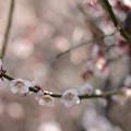 Photos: 春曜日