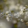 Photos: 春花集訪