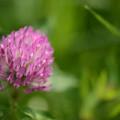 Photos: 初夏の諸花