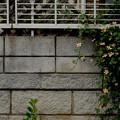 Photos: 壁を越える