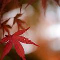 Photos: 紅葉2013