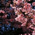 在りし日の春の日