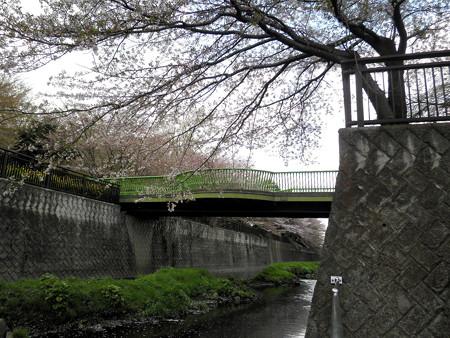 祖師谷公園-05せきれい橋(親水テラスから)