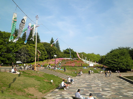 つつじ_世田谷公園c_鯉のぼり