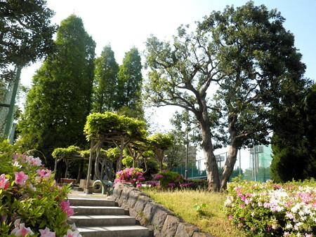 目黒区民センター公園-01ヤマモモの木・藤棚・つつじ