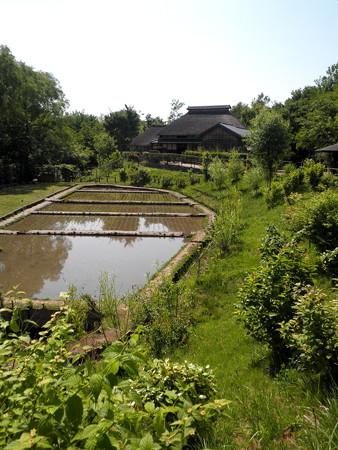 赤羽-北区ふるさと農家体験館(遠景)-03