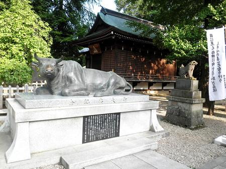 布多天神社-05c御神牛・神楽殿・狛犬