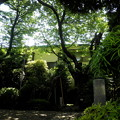 Photos: 光徳寺-05保存樹_桜など