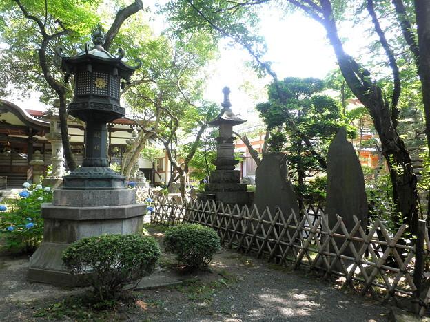 泉龍禅寺(狛江)-06本堂b-2紫陽花