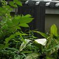 Photos: 明照院(入間町)-08閻魔堂の石碑