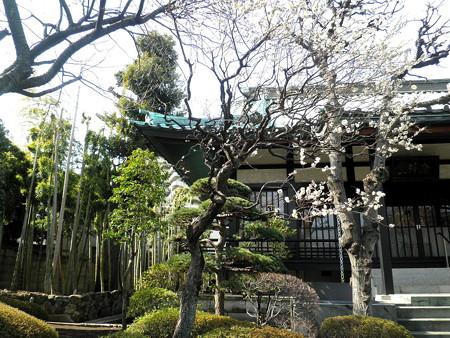 壽福寺-07梅と竹林と本堂と