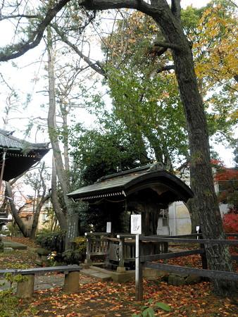 世田谷観音-09三鈷の松(胴吹三葉の松)と水屋