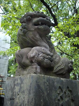 浅間神社-07狛犬a