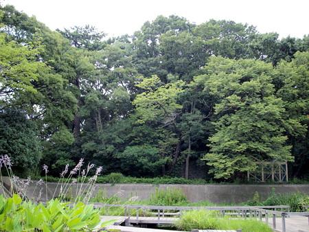 多摩川台公園-09水生植物園・野草園(元調布浄水場跡地)c_亀甲山古墳(後方)