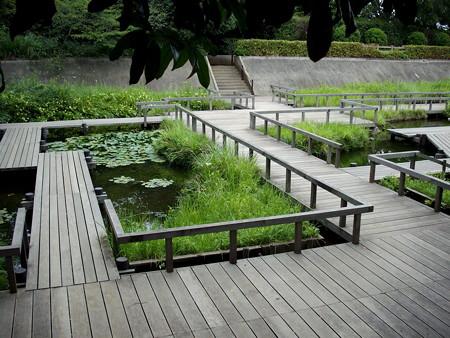 多摩川台公園-09水生植物園・野草園(元調布浄水場跡地)a