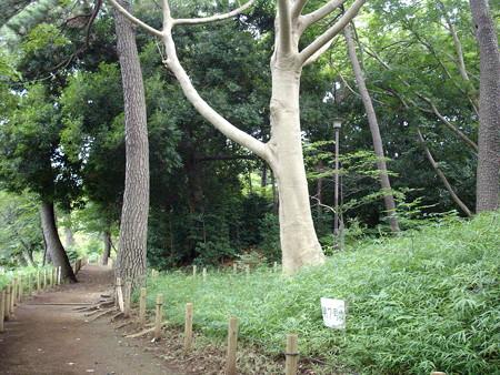 多摩川台公園-08多摩川台公園古墳群_第7号墳b