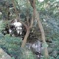 泉龍禅寺(狛江)_弁財天-02弁財天池c