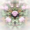 Photos: 薔薇の言葉d-03