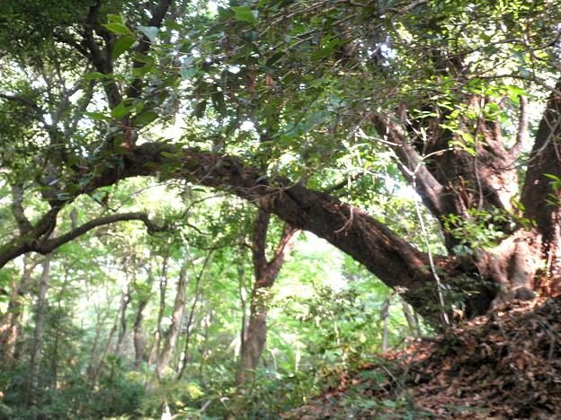 国立自然教育園(晩秋)-06