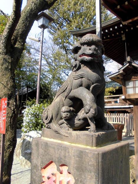 都電荒川線_王子駅前駅界隈:飛鳥山周辺_七所神社-05狛犬b