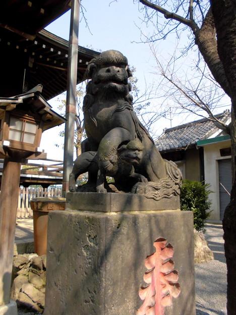 都電荒川線_王子駅前駅界隈:飛鳥山周辺_七所神社-05狛犬a