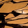 写真: ある日の土谷棚田