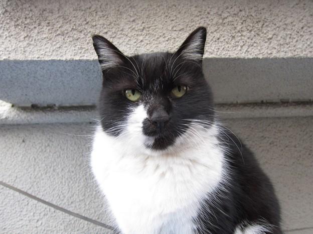 _121130 052 変則鉢割れ黒白猫