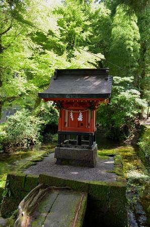 霧島神宮・若宮神社