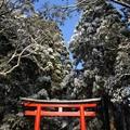 写真: 冬の霧島神宮・三の鳥居