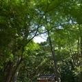 写真: 御塩殿神社 - 御塩殿神社1