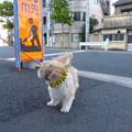 写真: P1110046