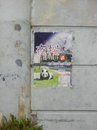 夜桜通り抜けのポスター DSCN8942