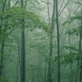 霧の向こうに・・・