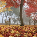 秋の向こうに