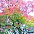 Photos: 高取城跡紅葉22