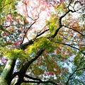 Photos: 高取城跡紅葉21